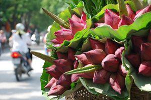 Hà Nội rực rỡ những sắc hoa mùa hạ