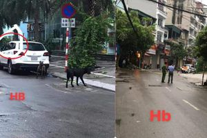 Lao ra từ xe Mercedes, 3 con chó hung dữ khiến công an phải phong tỏa cả tuyến phố để bắt