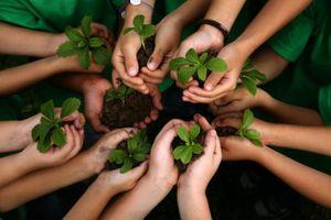 Học sinh, sinh viên Philippines phải trồng 10 cây xanh trước khi tốt nghiệp