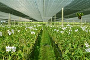 Tình hình sản xuất nông nghiệp tháng 5 và 5 tháng đầu năm 2019