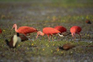 Mãn nhãn ở thiên đường chim hoang dã