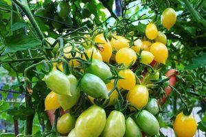 Khu vườn siêu dễ thương với đủ sắc màu rau củ quả organic của mẹ đơn thân cùng hai con trai