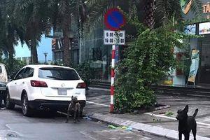 Phạt 700 nghìn đồng đối với người chủ thả rông 3 con chó dữ ở Hà Nội
