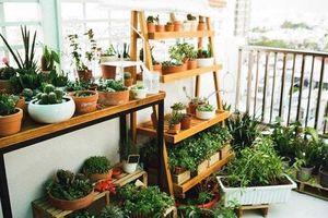 Từ những chậu hoa bị bỏ đi, ca sĩ Phương Vy Idol đã tạo nên khu vườn xanh tốt tại nhà