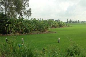 An Giang: Xây dựng vùng chuyên canh lúa Jasmine và Japonica