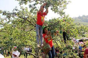 Bước chuyển mình của nông sản Sơn La