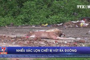 Nhiều xác lợn chết bị vứt ra đường