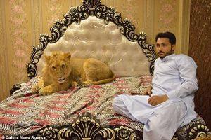 Cho sư tử nằm điều hòa, sở thích thú cưng 'sang chảnh' của đại gia Pakistan