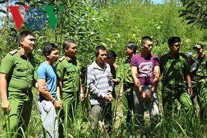 Thực nghiệm hiện trường vụ hạ độc chết hơn 10ha rừng thông