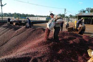 Cà phê Thắng Lợi và Vinaconex 39 lên thị trường UPCoM