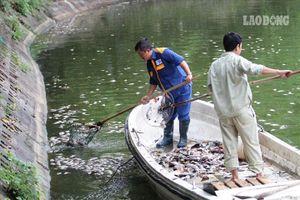 Hà Nội: Cá chết bốc mùi nồng nặc, nổi trắng hồ Văn Chương
