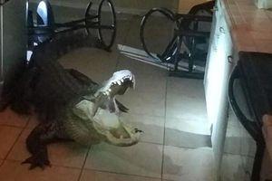 Cá sấu dài 3m phá cửa sổ trườn vào nhà trong đêm và 'thử' rượu