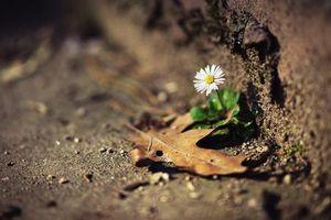 Sự kỳ diệu của nếp sống tâm linh