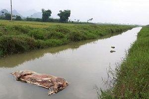 Ninh Bình: Kiểm điểm trách nhiệm 1 Chủ tịch xã vì để 'xác lợn vứt ra môi trường'