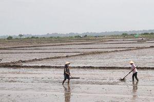 Thừa Thiên - Huế: Nắng hạn kéo dài ảnh hưởng đến sản xuất nông nghiệp