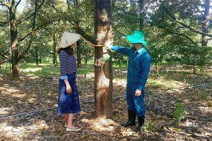 Lâm Đồng: Bị 'đàm tiếu' vì chăm vườn sầu riêng bằng... điện thoại thông minh