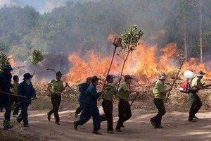 Đốt thực bì để trồng rừng, một y sĩ ở Quảng Trị ngạt khí tử vong