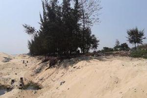 Đà Nẵng: Thông tin mới vụ chặt hạ 3 hecta rừng phòng hộ ven biển để làm bờ kè