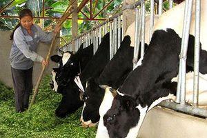 Thị trường ngách - cơ hội mới của ngành sữa Việt Nam