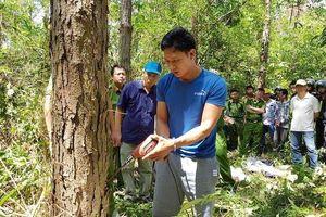 Bắt đối tượng chủ mưu vụ 'hạ độc' rừng thông tại Lâm Đồng