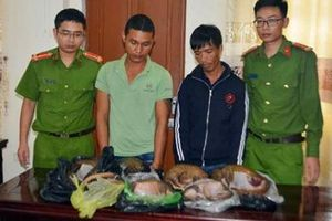 Nghệ An: Bắt 2 đối tượng buôn bán động vật hoang dã nguy cấp quý hiếm