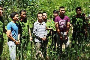 Chân dung kẻ thủ ác hạ độc hơn 10 ha rừng thông 20 năm tuổi ở Lâm Đồng