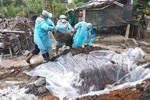 Khẩn trương phòng chống bệnh dịch tả lợn châu Phi
