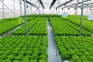 Dòng vốn FDI vào lĩnh vực nông nghiệp công nghệ cao còn khiêm tốn