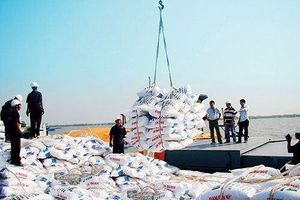 Loại hàng loạt đơn vị 'gác' chất lượng phân bón nhập khẩu vì... có vấn đề