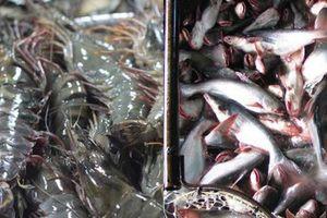 Dự báo xuất khẩu thủy sản sang Trung Quốc gặp khó