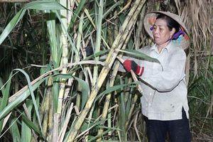 Vĩnh Phúc: 'Bà đỡ' mát tay hỗ trợ nông dân vượt khó, làm giàu ở Ngọc Mỹ