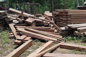 Vụ gỗ quý trong trụ sở UBND xã: 'Không ai dám bán'