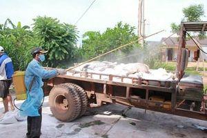 Tiếp tục xuất hiện thêm 3 ổ dịch tả lợn châu Phi tại Đắk Lắk