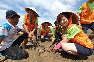 Tập đoàn SK sẽ tăng gấp đôi quy mô phục hồi rừng ngập mặn tại Việt Nam