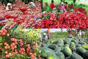 40 doanh nghiệp Việt Nam sẽ xúc tiến xuất khẩu sang Trung Quốc