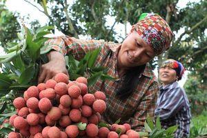 Xuất khẩu nông sản sang Trung Quốc: Vượt rào cản bằng chất lượng