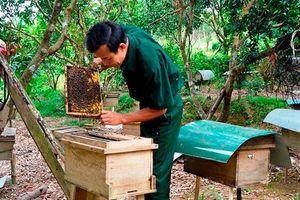 Nuôi ong lấy mật ở huyện miền núi Tuyên Hóa