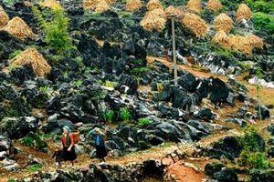Lập quy hoạch chung Công viên địa chất toàn cầu Cao nguyên đá Đồng Văn, Hà Giang