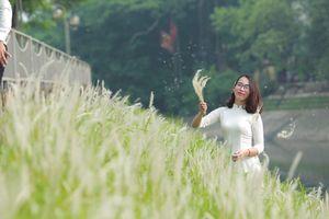 Ngỡ ngàng trước vẻ đẹp của hoa cỏ lau trắng ven sông Tô Lịch