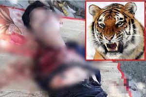 Kinh hoàng: Người đàn ông bị hổ cắn đứt lìa 2 cánh tay trong khu du lịch sinh thái