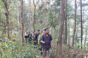 Tủa Chùa (Điện Biên): Nhờ giữ rừng đời sống người dân được ấm no