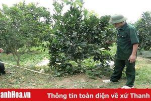 Huyện Thọ Xuân thực hiện nhiều chính sách phát triển cây ăn quả chất lượng cao