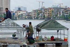 Hải Phòng dựng nhà cho thiên nga trên sông Tam Bạc