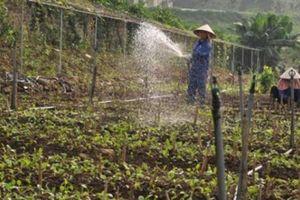 DN và HTX đóng vai trò then chốt trong tiêu thụ nông sản an toàn