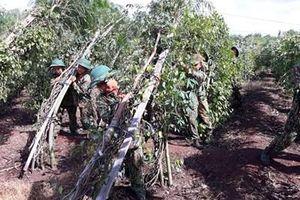 Hỗ trợ người dân biên giới Bình Phước khắc phục thiệt hại do lốc xoáy