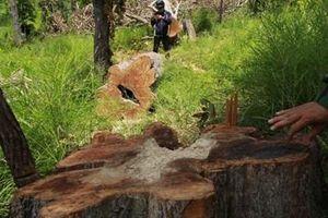VKS kiến nghị biện pháp phòng, chống vi phạm, tội phạm nhằm bảo vệ, phát triển rừng