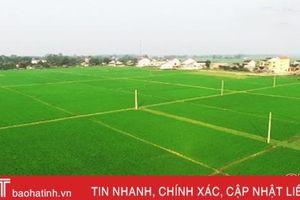 Xây dựng cánh đồng lớn tại Hà Tĩnh: Chủ trương có, khó thực hiện
