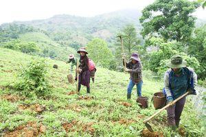 Nâng cao quyền tiếp cận đất đai cho đồng bào dân tộc thiểu số: Đòn bẩy để phát triển bền vững