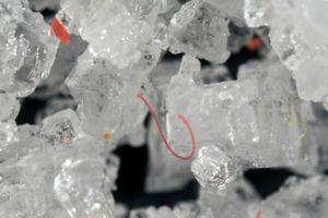 Mỗi năm có ít nhất 50.000 hạt vi nhựa đi vào cơ thể người
