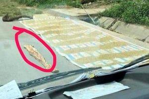 Cần phạt nghiêm tình trạng phơi lúa trên đường